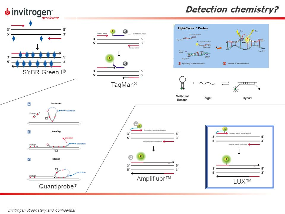 Detection chemistry SYBR Green I® TaqMan® Amplifluor™ LUX™
