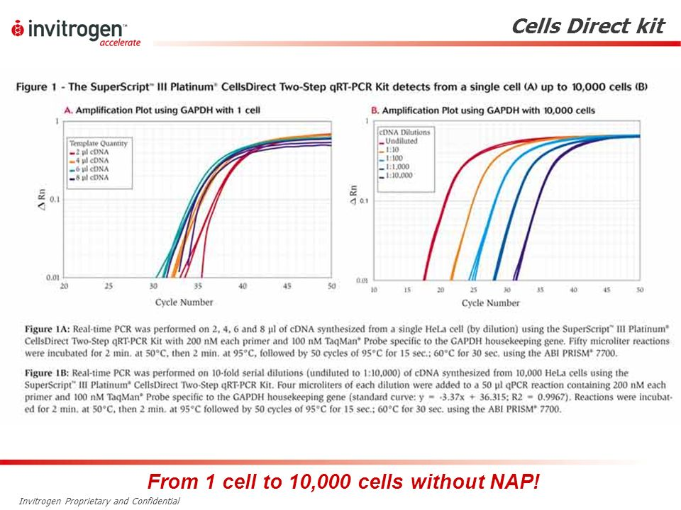 From 1 cell to 10,000 cells without NAP!