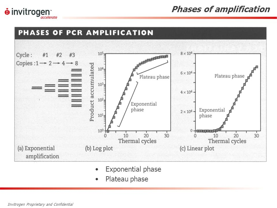 Phases of amplification
