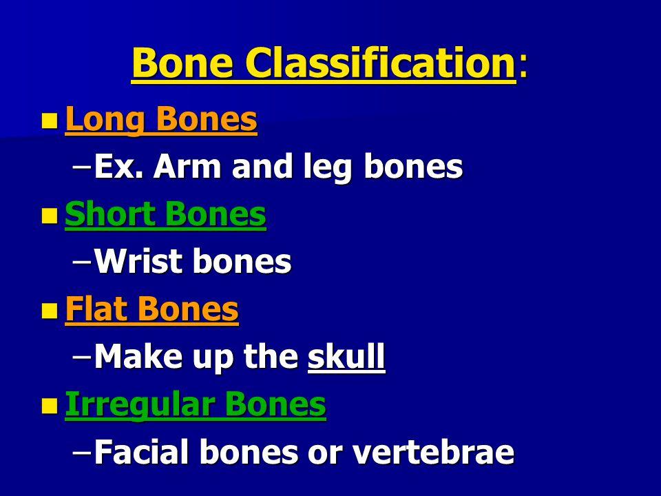 Bone Classification: Long Bones Ex. Arm and leg bones Short Bones