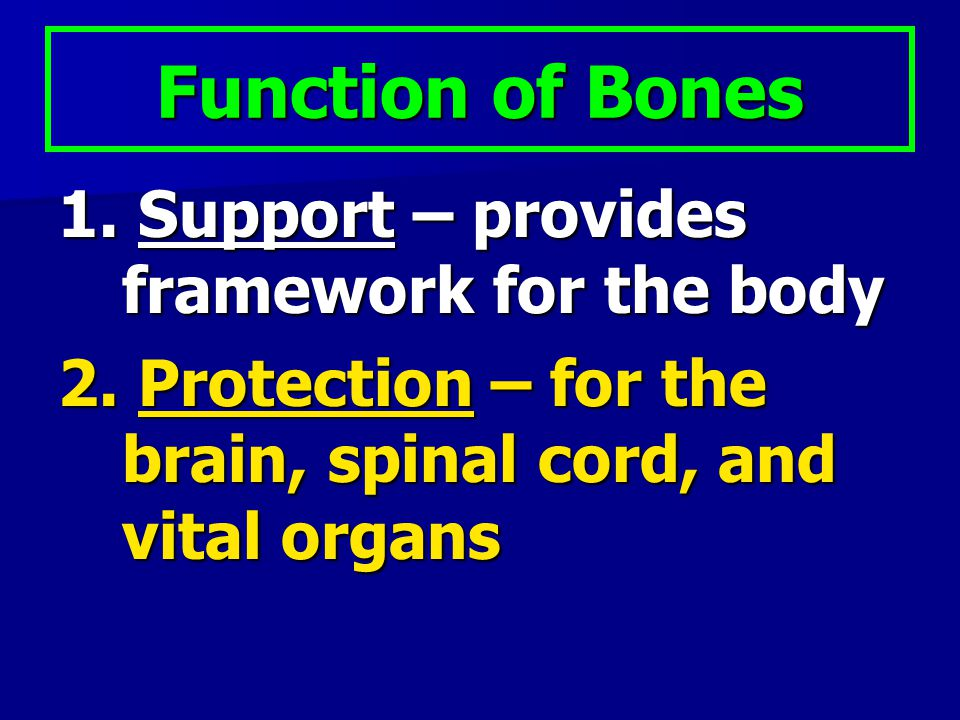 Function of Bones 1. Support – provides framework for the body