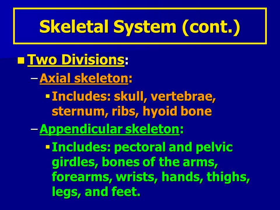 Skeletal System (cont.)