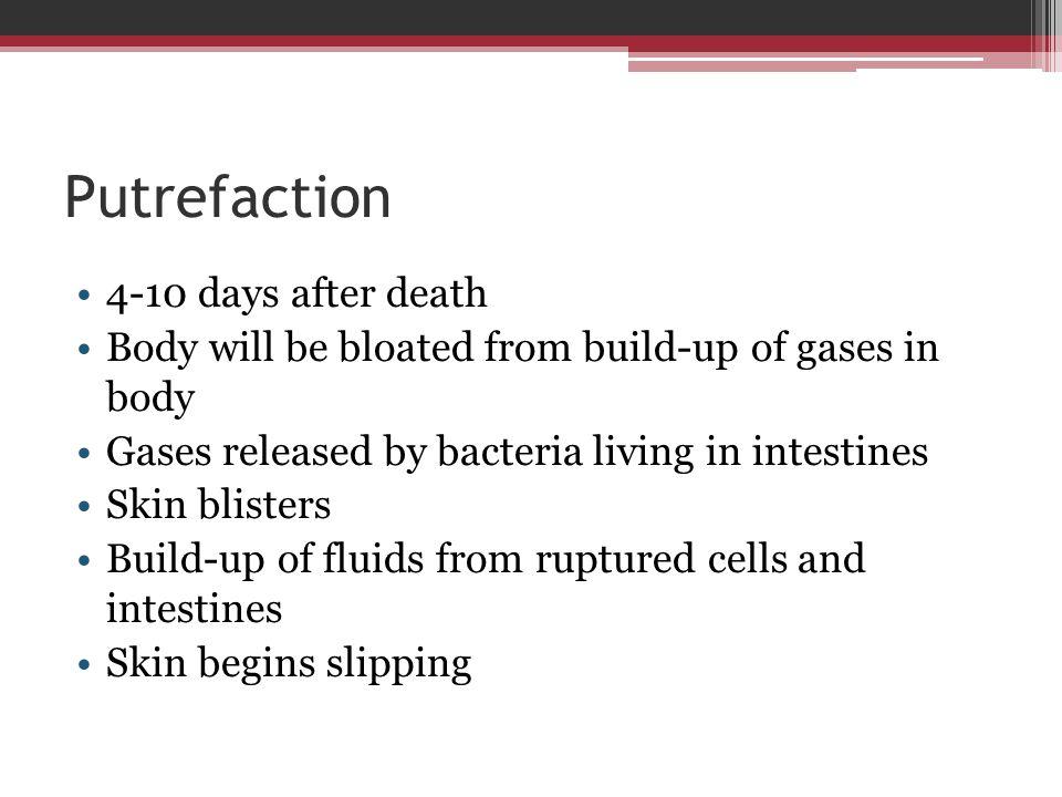 Putrefaction 4-10 days after death