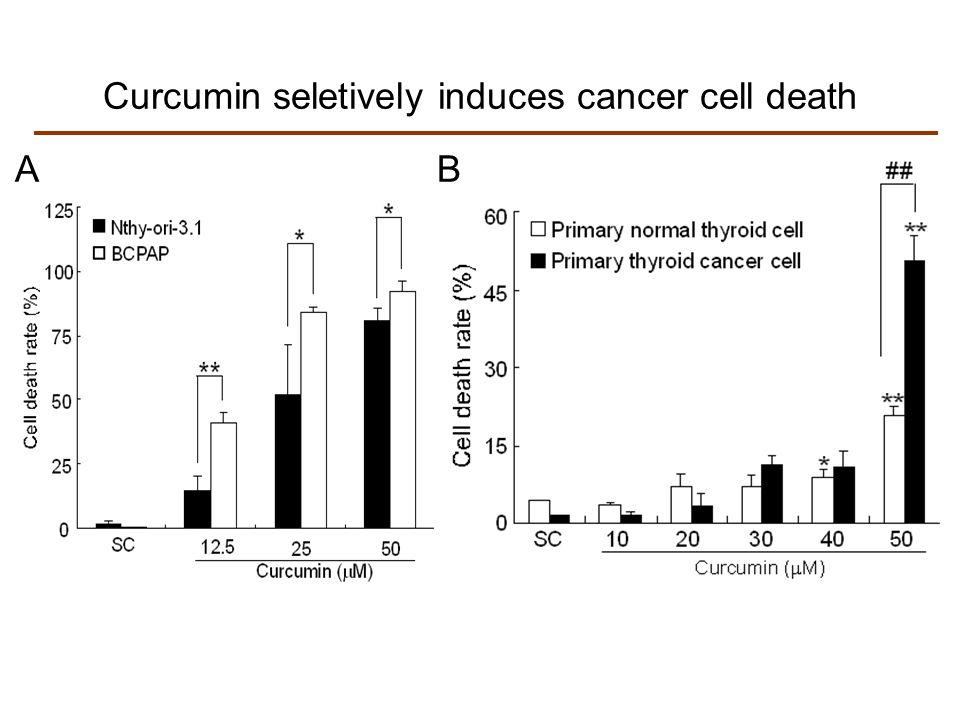Curcumin seletively induces cancer cell death
