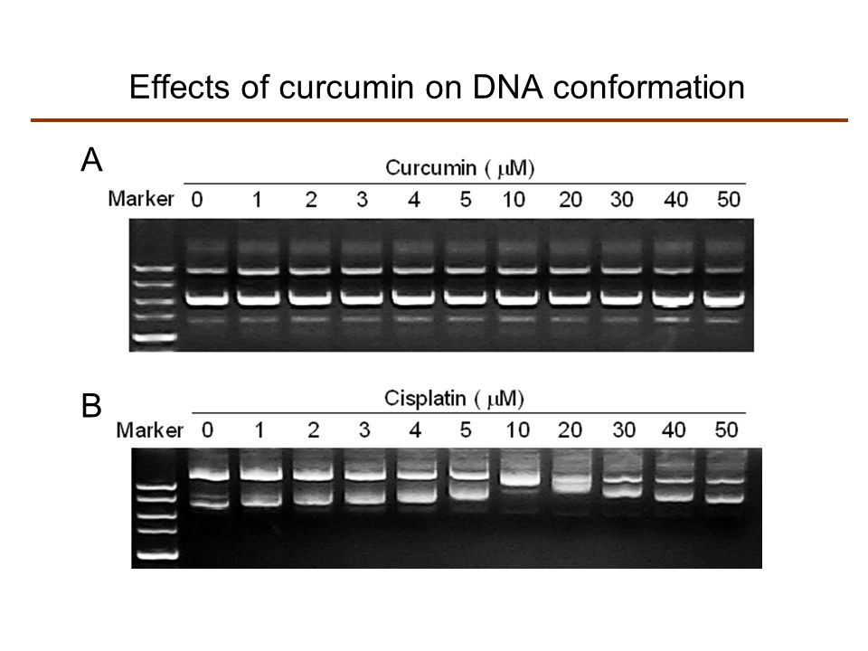 Effects of curcumin on DNA conformation