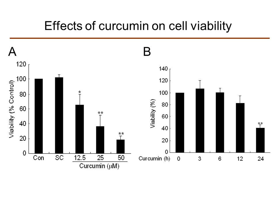 Effects of curcumin on cell viability