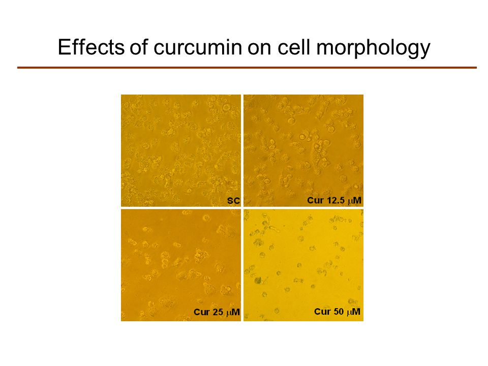 Effects of curcumin on cell morphology
