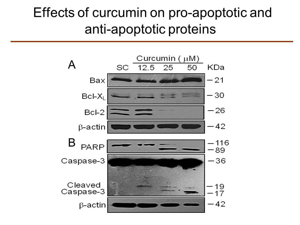 Effects of curcumin on pro-apoptotic and anti-apoptotic proteins