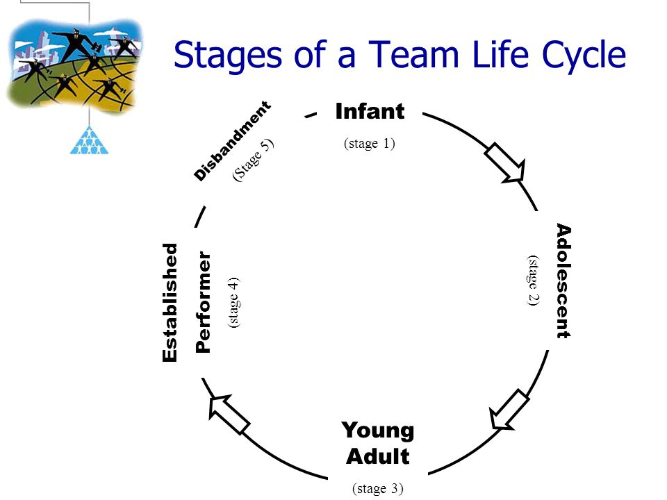 Stages of a Team Life Cycle