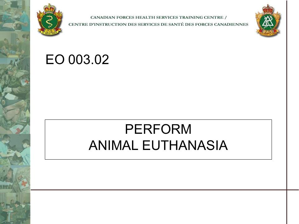 PERFORM ANIMAL EUTHANASIA