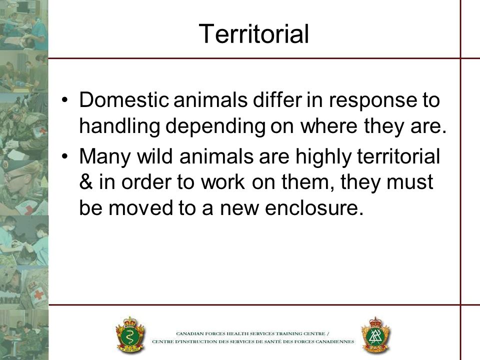 Territorial Domestic animals differ in response to handling depending on where they are.