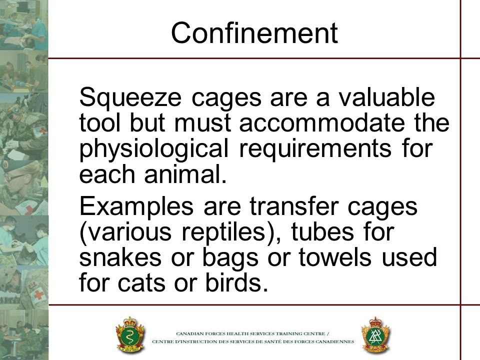 Confinement Squeeze cages are a valuable tool but must accommodate the physiological requirements for each animal.