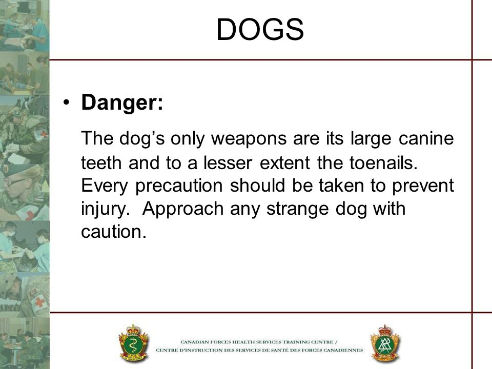 DOGS Danger: