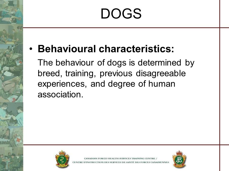 DOGS Behavioural characteristics: