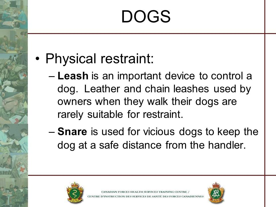 DOGS Physical restraint: