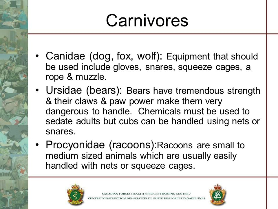 Carnivores Canidae (dog, fox, wolf): Equipment that should be used include gloves, snares, squeeze cages, a rope & muzzle.