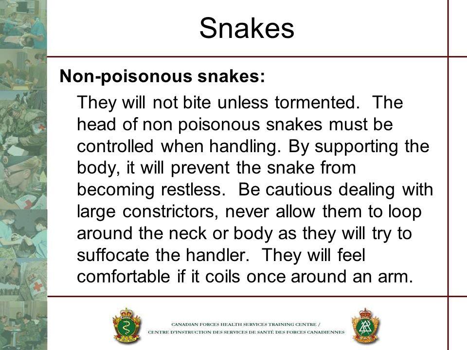 Snakes Non-poisonous snakes: