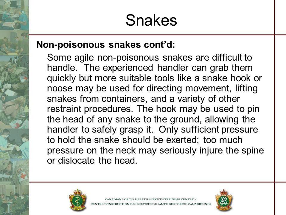 Snakes Non-poisonous snakes cont'd: