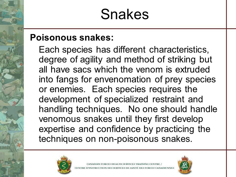Snakes Poisonous snakes: