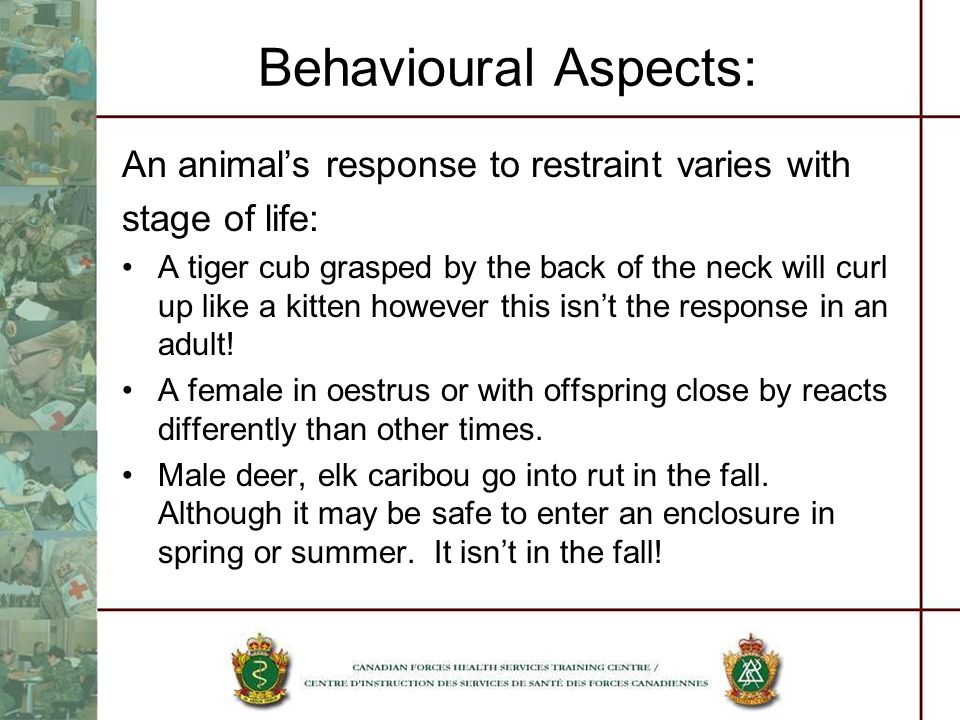 Behavioural Aspects: An animal's response to restraint varies with