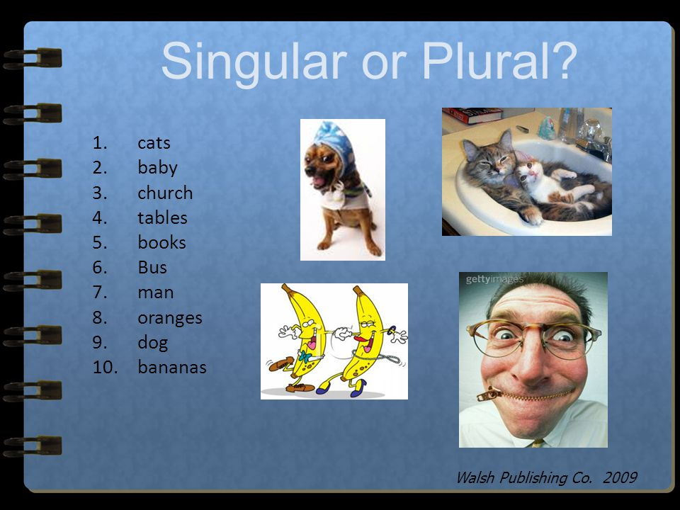 Singular or Plural cats baby church tables books Bus man oranges dog