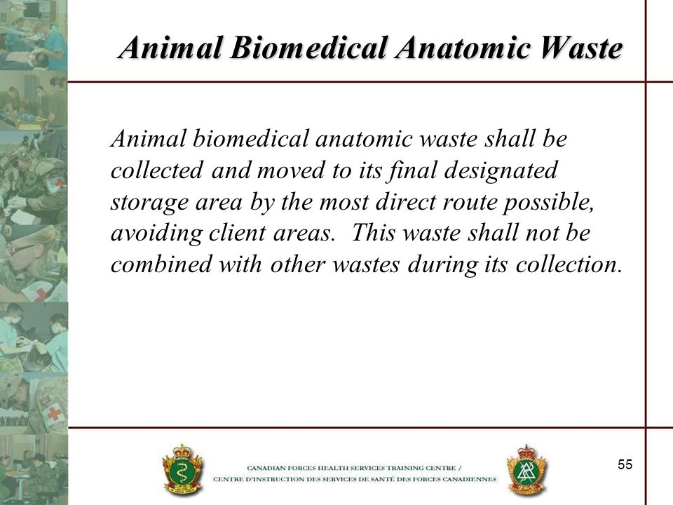 Animal Biomedical Anatomic Waste