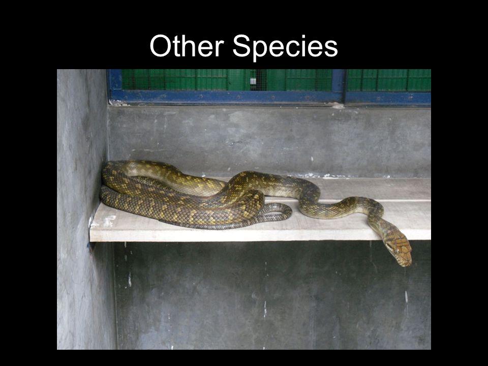 Other Species