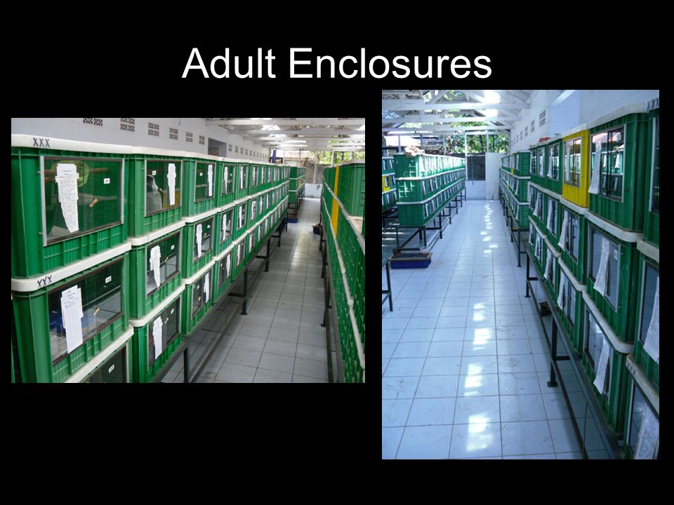 Adult Enclosures
