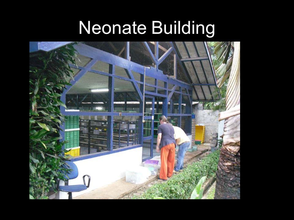 Neonate Building