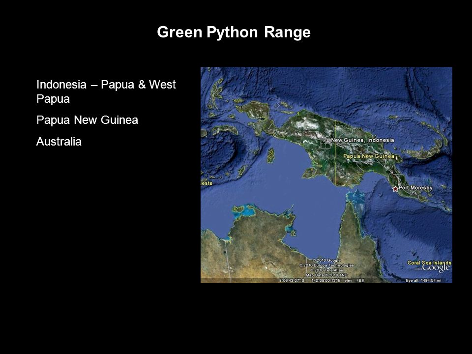 Green Python Range Indonesia – Papua & West Papua Papua New Guinea