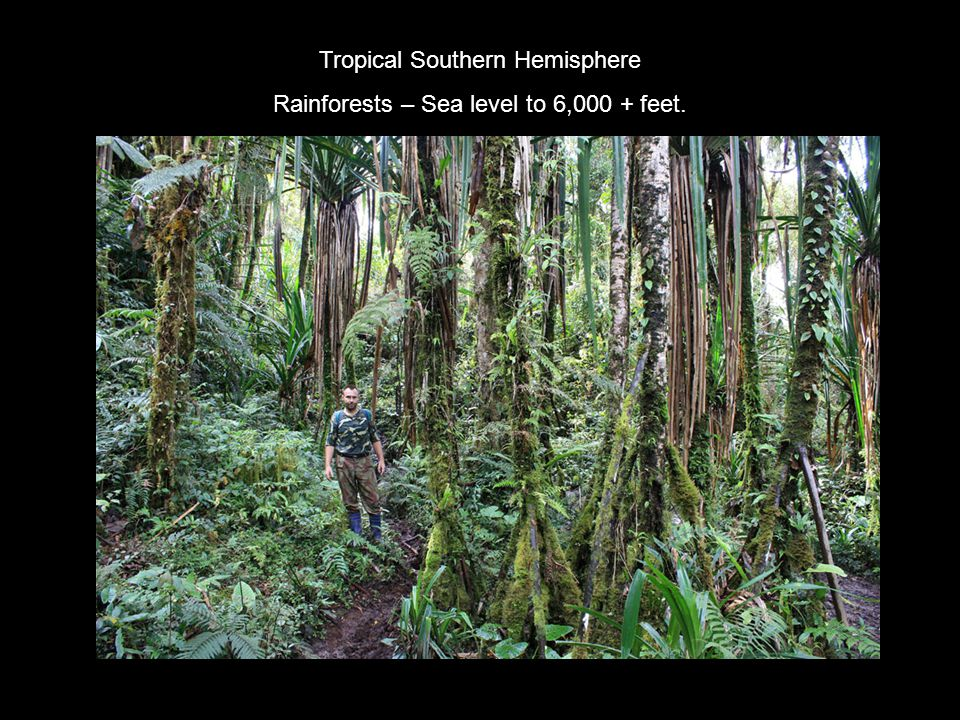 Tropical Southern Hemisphere Rainforests – Sea level to 6,000 + feet.