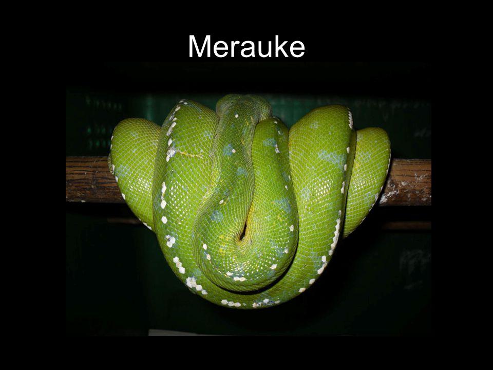 Merauke