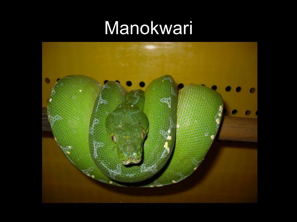 Manokwari
