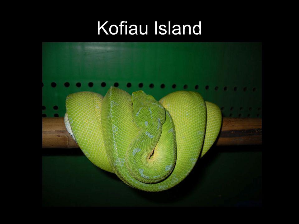 Kofiau Island