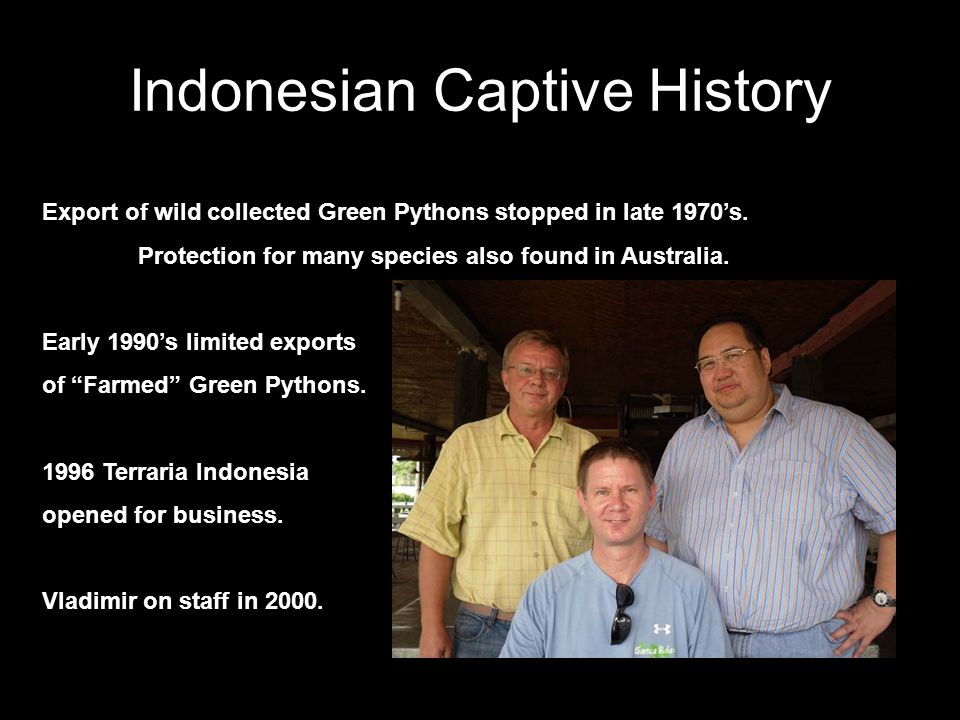 Indonesian Captive History