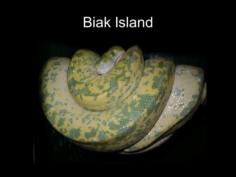 Biak Island