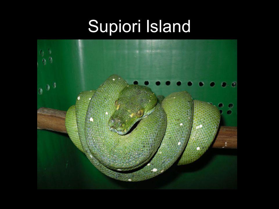 Supiori Island