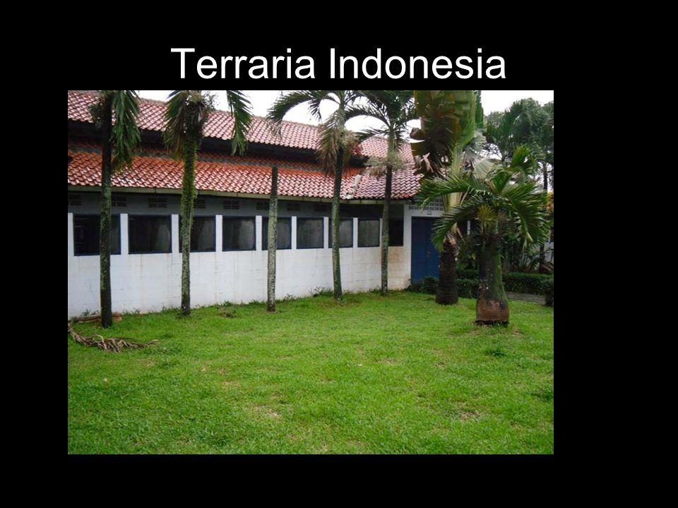 Terraria Indonesia
