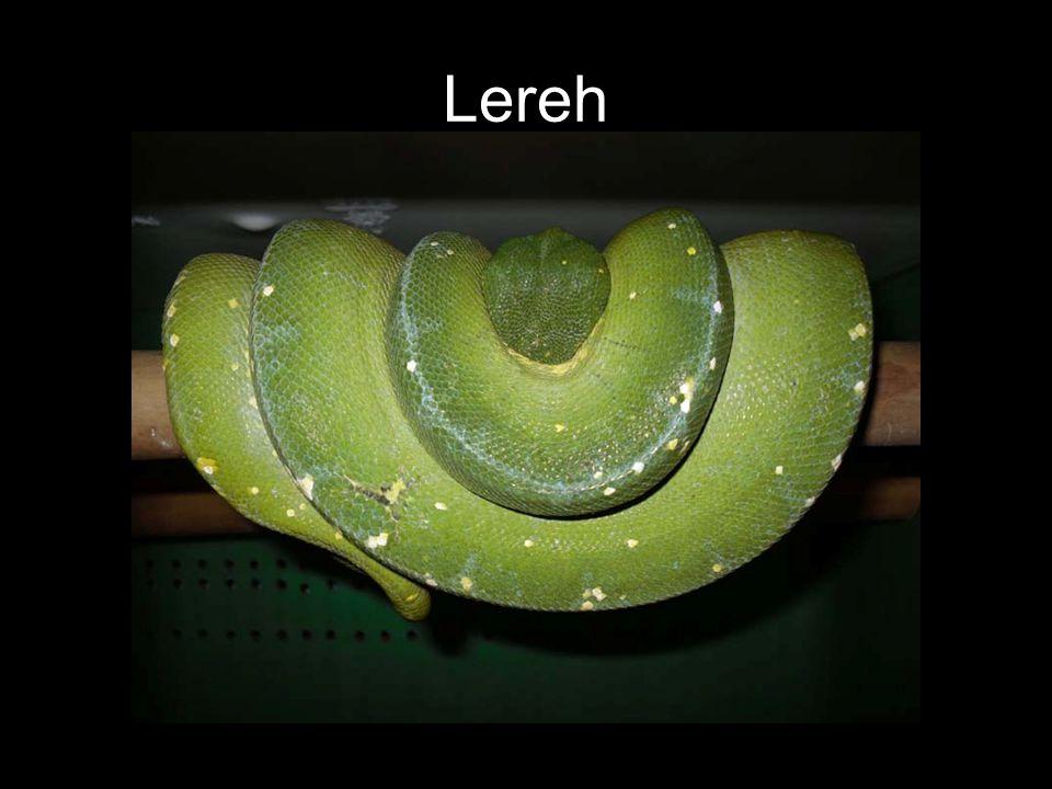 Lereh