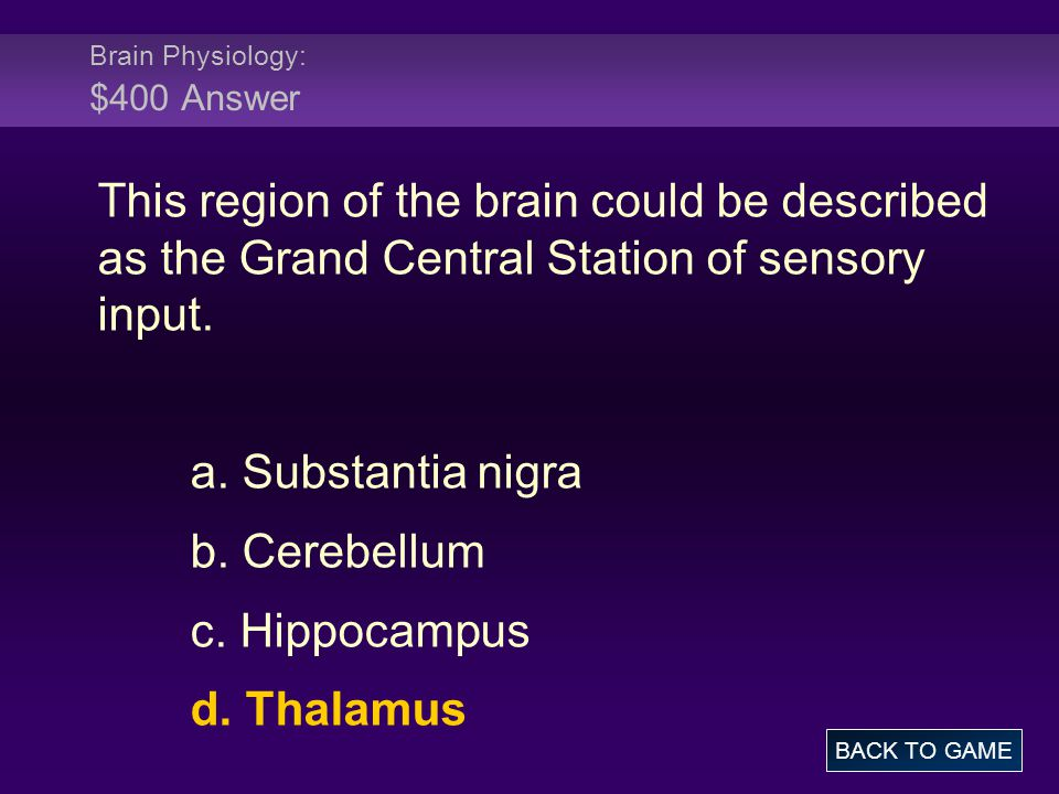 Brain Physiology: $400 Answer