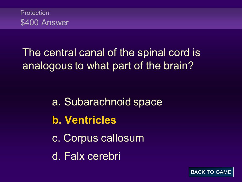Protection: $400 Answer The central canal of the spinal cord is analogous to what part of the brain