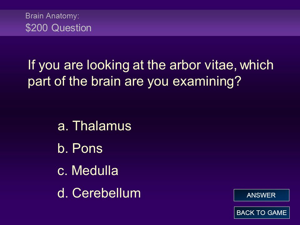 Brain Anatomy: $200 Question