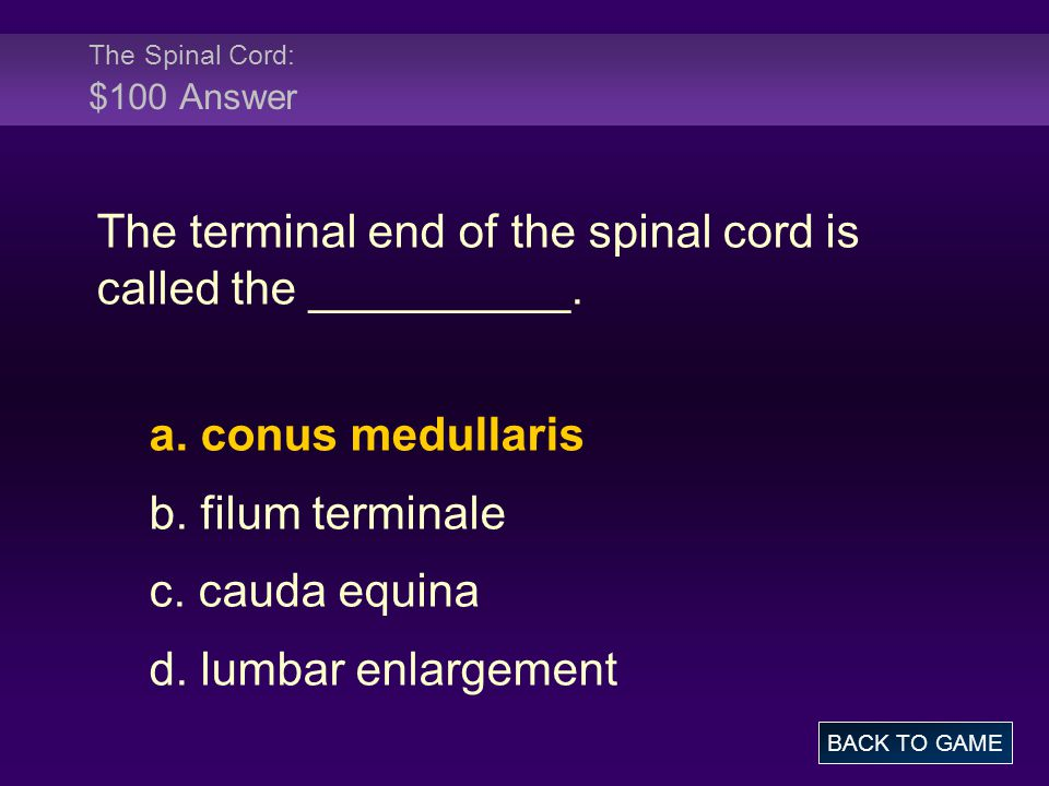 The Spinal Cord: $100 Answer