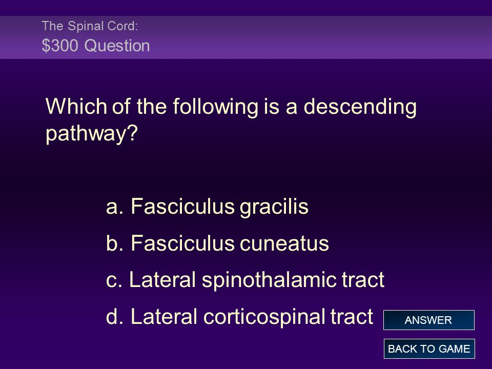 The Spinal Cord: $300 Question