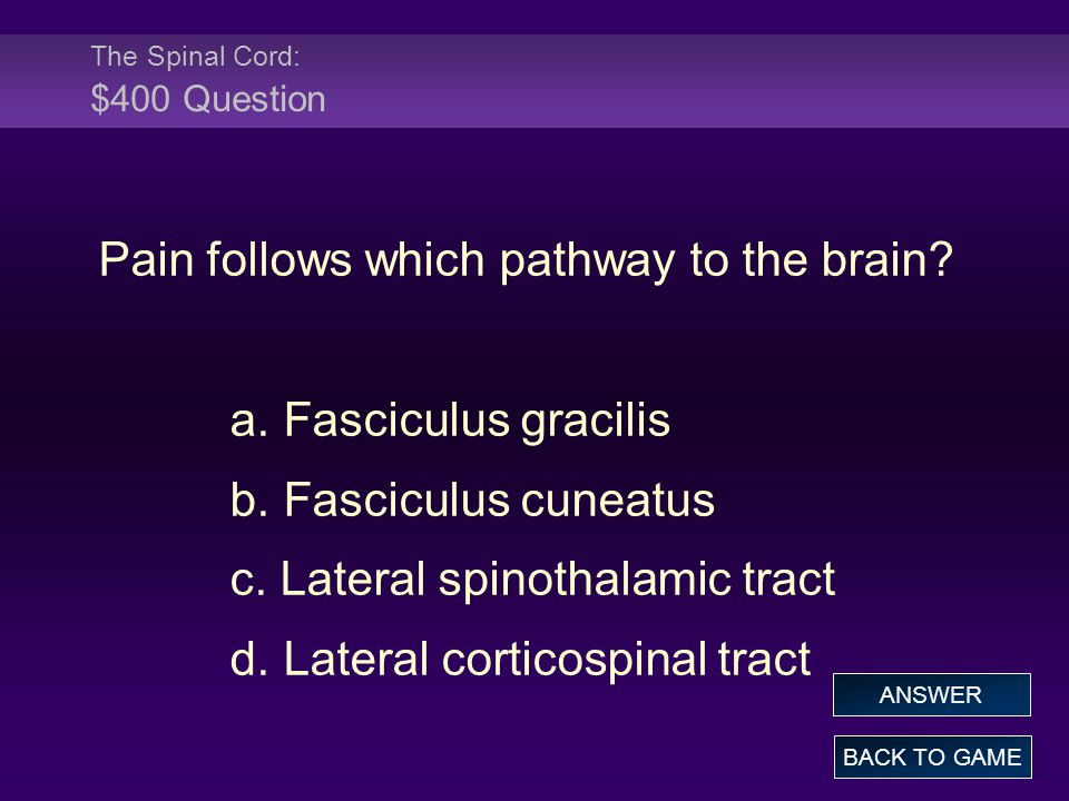 The Spinal Cord: $400 Question
