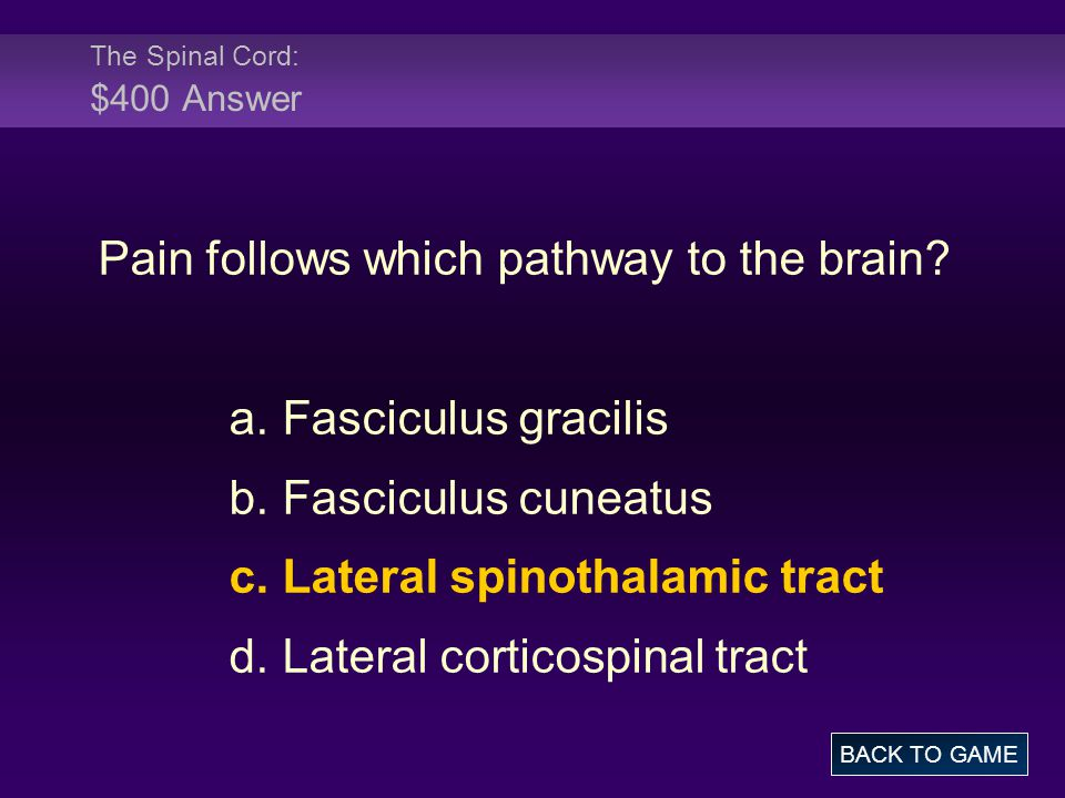 The Spinal Cord: $400 Answer
