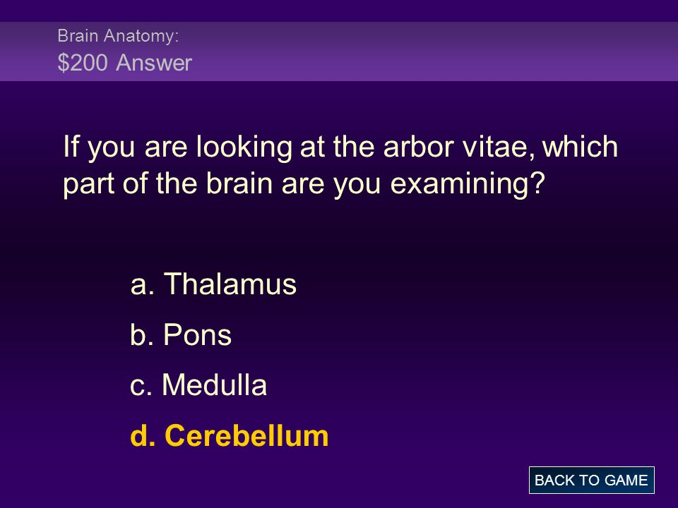 Brain Anatomy: $200 Answer