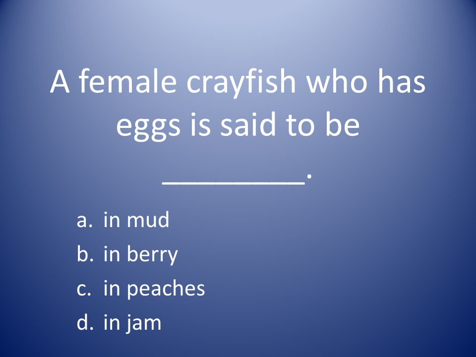 A female crayfish who has eggs is said to be ________.