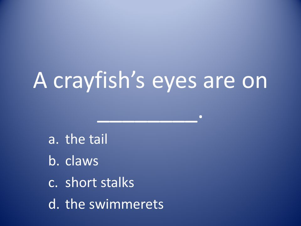 A crayfish's eyes are on ________.