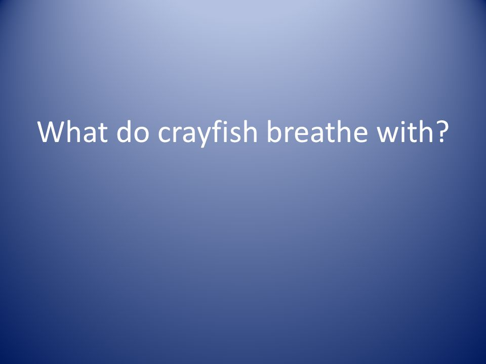 What do crayfish breathe with